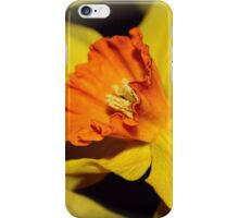 Gold and Gorgeous Daffodils iPhone Case/Skin