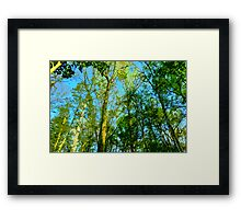 Afternoon Light in the Forest Framed Print