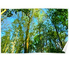 Afternoon Light in the Forest Poster