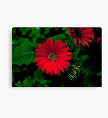 MEXICAN RED Canvas Print
