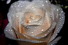Rose and Raindrops 2 by Valerie Henry