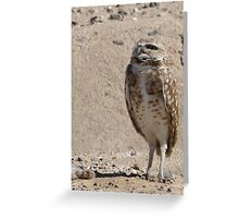 Burrowing Owl ~ Sky Scanning Greeting Card