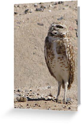 Burrowing Owl ~ Sky Scanning by Kimberly Chadwick