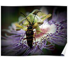 Purple Passion Flower Poster