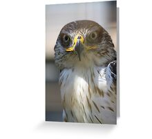 Ferruginous Hawk Greeting Card