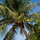 Coconut Palm Tree - Langkawi by Colin  Ewington