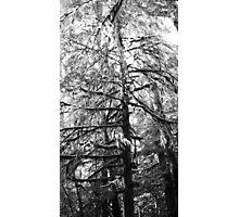 Mossy Photographic Print