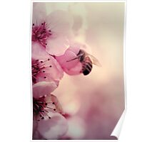 Bee in Pink  Poster