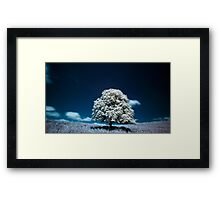 Tree (IR) Framed Print