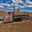 Out to pasture by Bryan D. Spellman