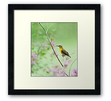 Out on a limb - Sunbird Framed Print