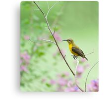 Out on a limb - Sunbird Canvas Print