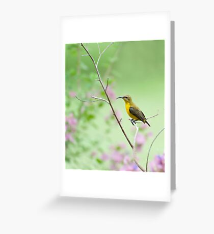 Out on a limb - Sunbird Greeting Card