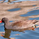 Dusky Moorhen, Centennial Park, Sydney by Erik Schlogl