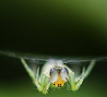 Spider in its web by maldesowhat