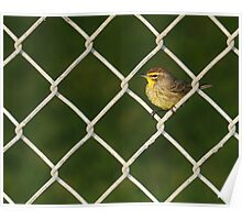 Not on the Fence, In the Fence- Palm Warbler Poster