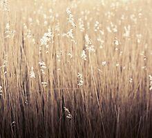 Seasons I like. by Lawrence Millar
