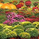 An Autumn Display by lorilee