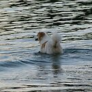 Quick Dip Before Dinner by DEB CAMERON