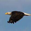 Just Passing By- Bald Eagle by Tom Dunkerton