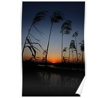 Color of the Day- St. John's River Poster