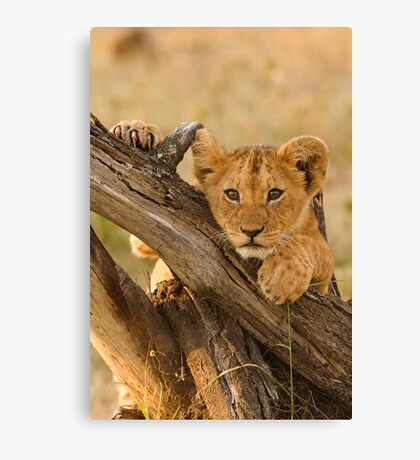 Cute Lion Cub, Masai Mara National Park Canvas Print