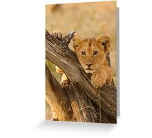 Cute Lion Cub, Masai Mara National Park Greeting Card