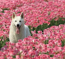 Tulip dog by DutchLumix