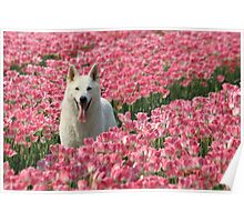Tulip dog Poster