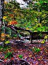 Creekside View by Marcia Rubin