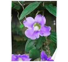 Pretty Vine Flowers 1 Silky Poster