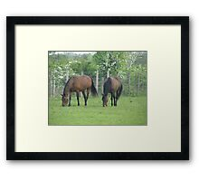 Two Equine Friends Framed Print
