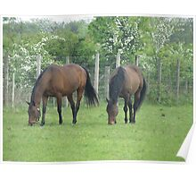 Two Equine Friends Poster