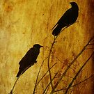 Watchers of the East and West by shutterbug2010