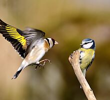 Goldfinch and Blue tit by Grant Glendinning