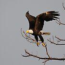Taking Flight by Tom Dunkerton
