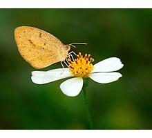Sleepy Orange Butterfly Photographic Print