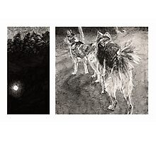 Two Dogs at Night Photographic Print