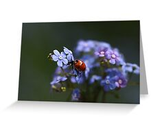 Ladybird... Greeting Card