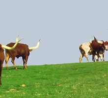 LongHorns Grazing by Charldia