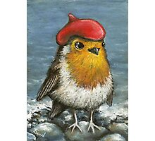 Master robin at the seashore Photographic Print