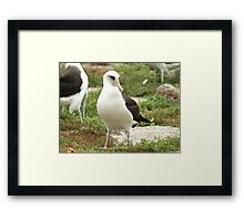 Wisdom, A Story Of Hope And Survival Framed Print