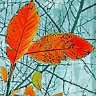 Lace of Autumn Abstract by Susan Werby