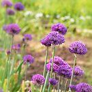 It's spring! by Zuzana D Photography