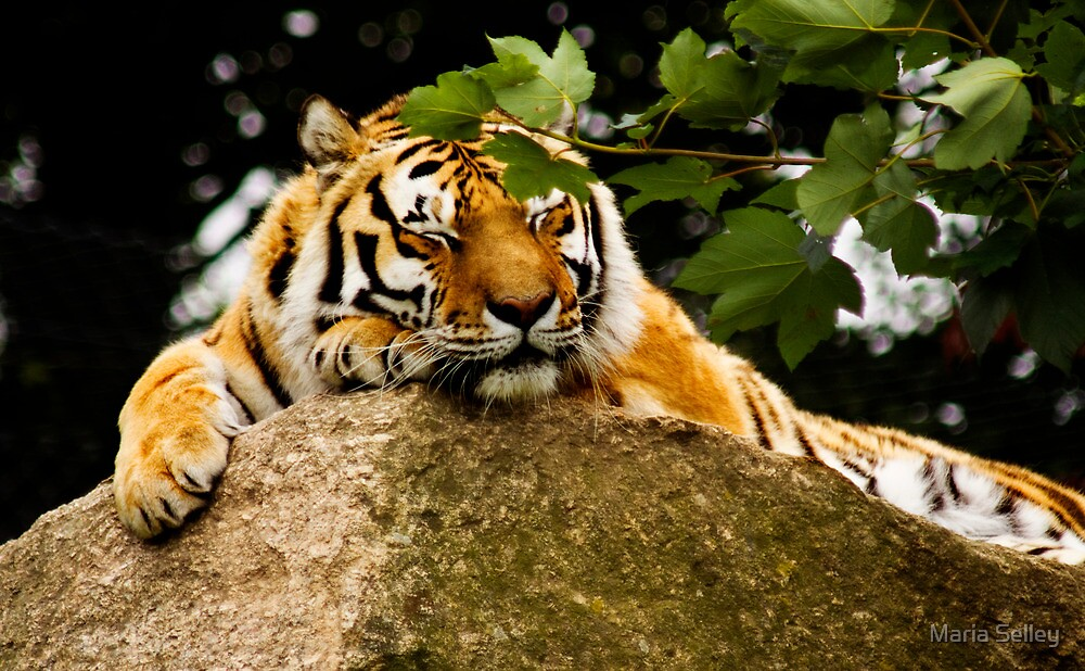 Time for a Snooze !! by Maria Selley