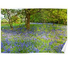 Blue Bell Wood  Poster