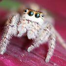 Clematis spider by katpartridge