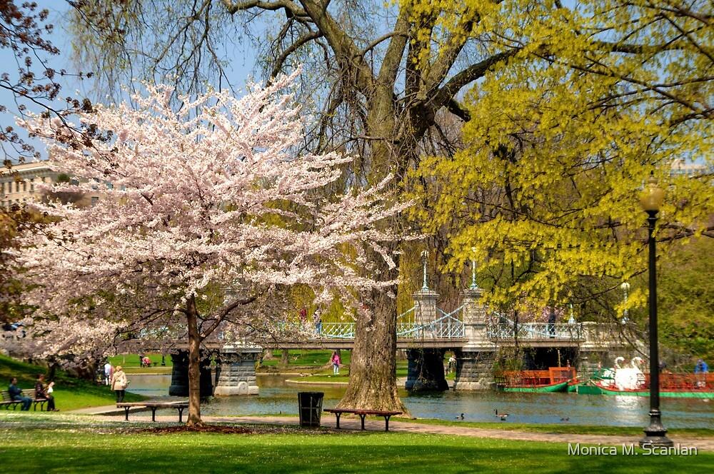Spring in Boston Public Garden by Monica M. Scanlan