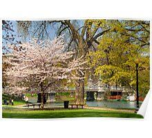 Spring in Boston Public Garden Poster