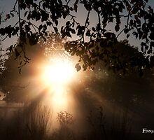 morning glory by Embella